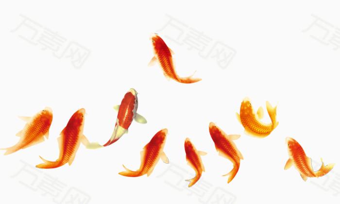 红色锦鲤 红鲤鱼免费下载   锦鲤  红色鲤鱼