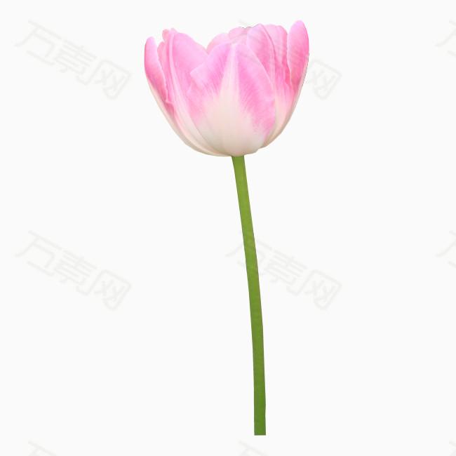玫瑰花png免抠图素材
