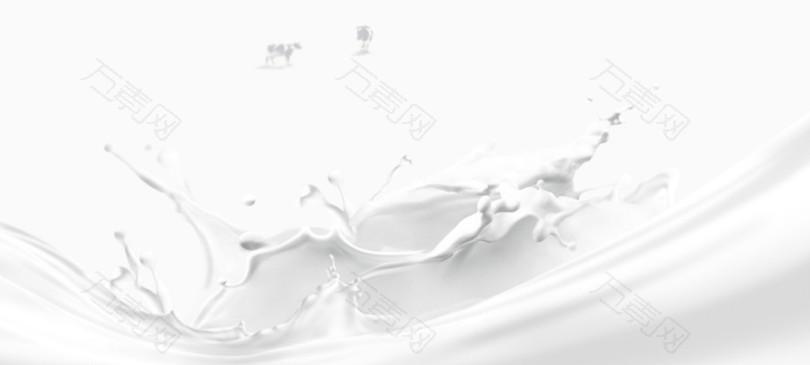 白色牛奶奶花