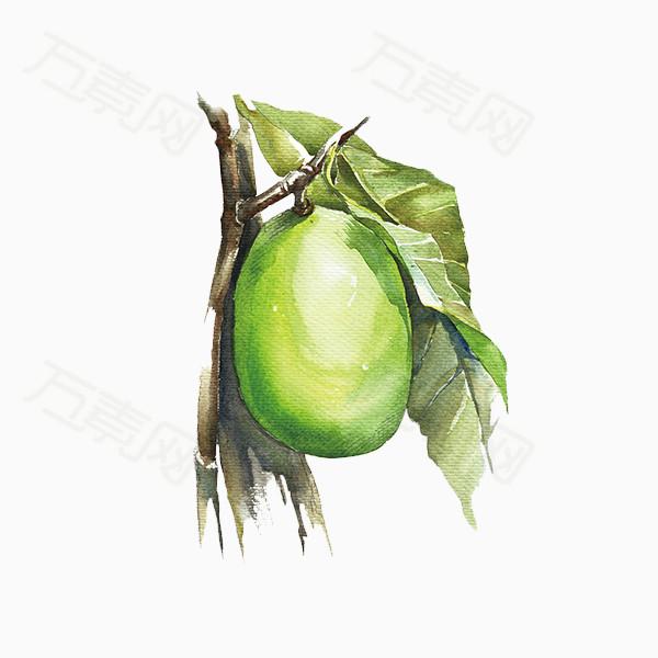 手绘水果 绿色水果 绿色梨 植物 绿叶 免抠图