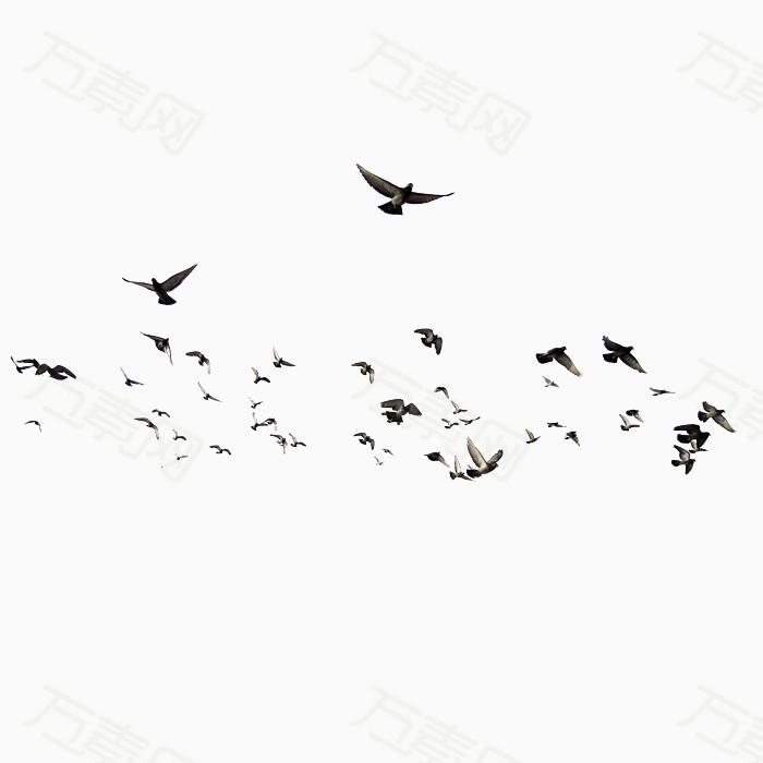 飞鸽动物 成群的小鸟
