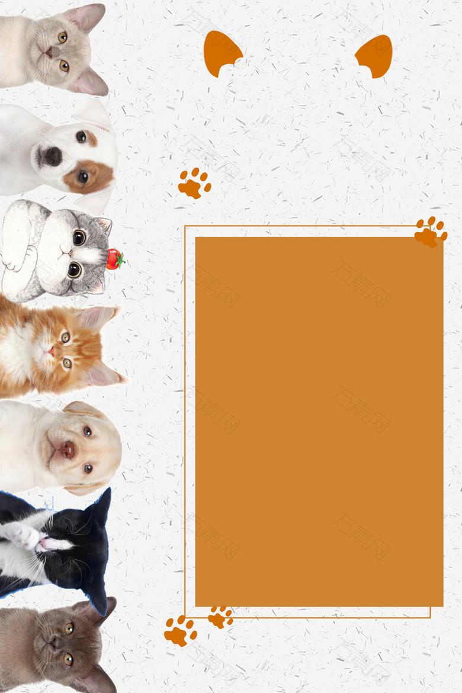 可爱宠物猫狗海报
