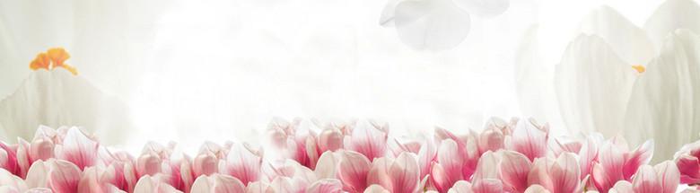 唯美粉色郁金香海报背景
