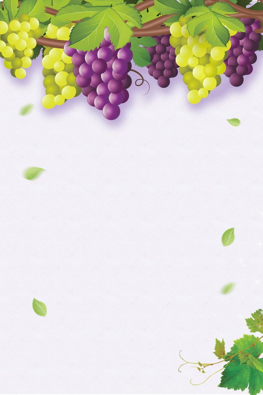 清新葡萄采摘葡萄熟了海报背景