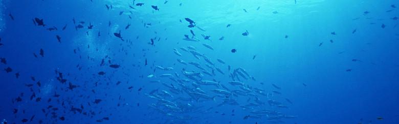 海底世界鱼群背景