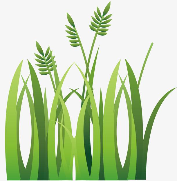 麦穗球场草坪插画