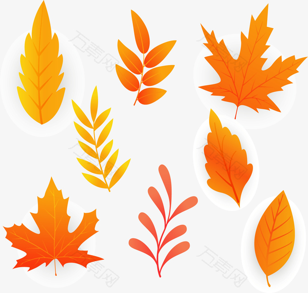 飞舞的秋天美丽枫叶
