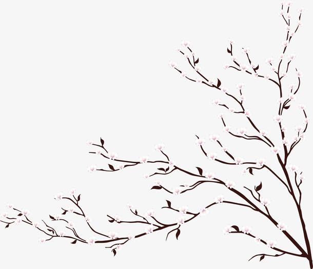 浪漫春天白色樱花