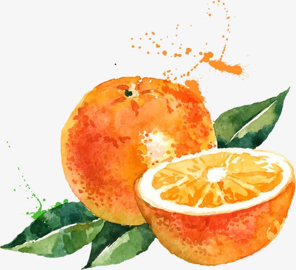 彩绘优化橙子水果