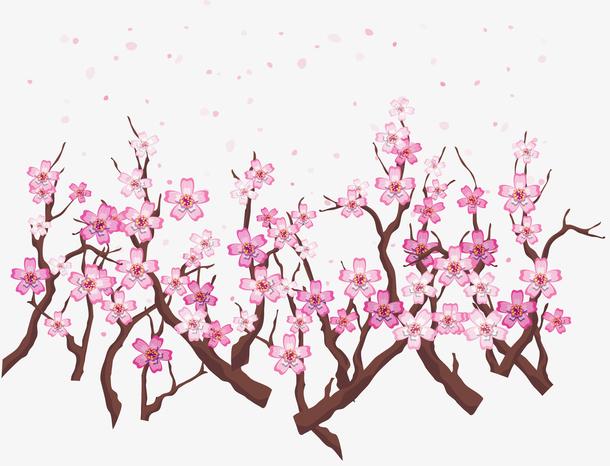 春天飞舞樱花树枝
