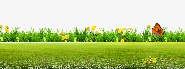 绿色草地花朵背景