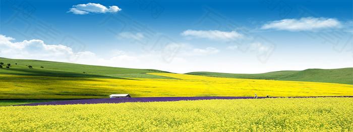 山坡上的油菜花种植园背景