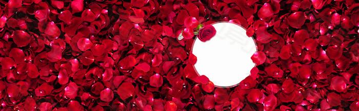 红玫瑰花海背景
