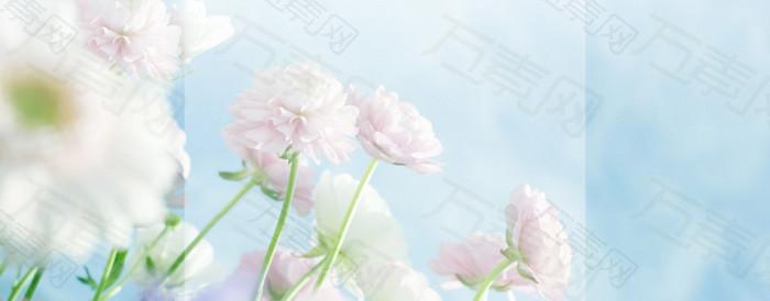 清新大花蓝色背景