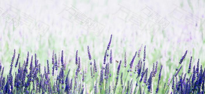 简约唯美紫色梦幻背景图