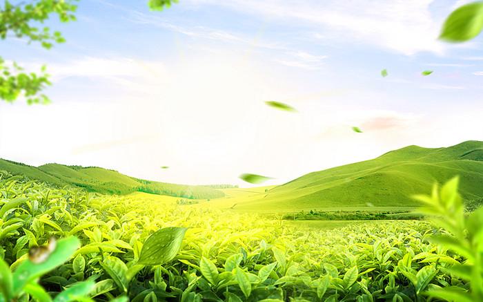 蓝天白云风景草地绿地树叶漂浮叶子背景素材