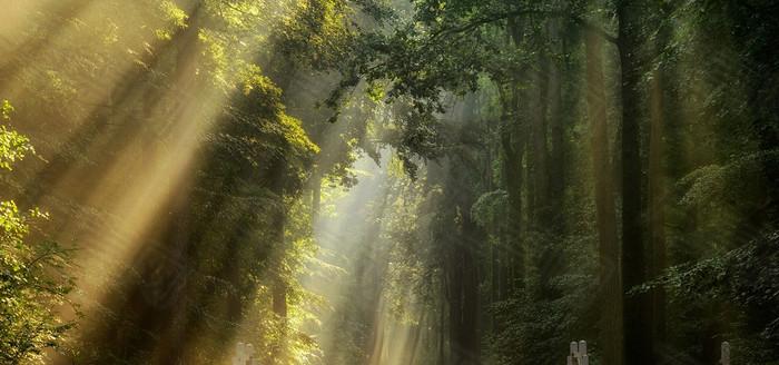 森林阳光海报素材