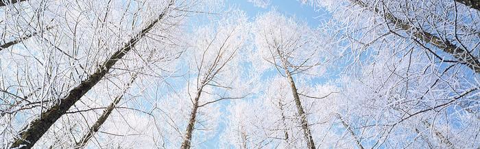 冰雪大树背景