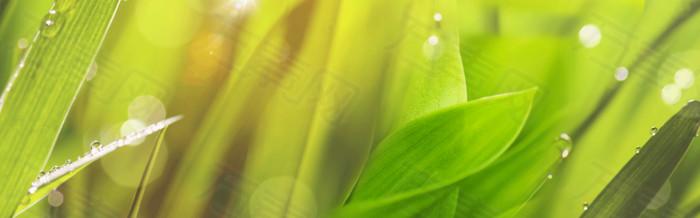 绿树 水珠 背景 banner