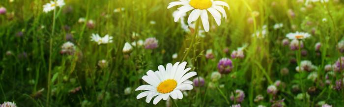 唯美春季花卉背景