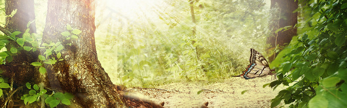 唯美大气森林海报背景