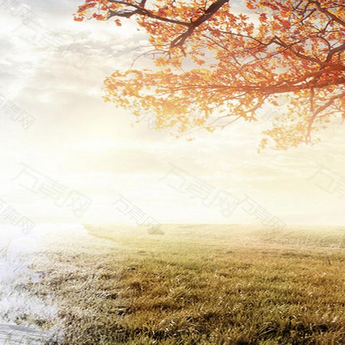 户外秋天落叶黄色背景