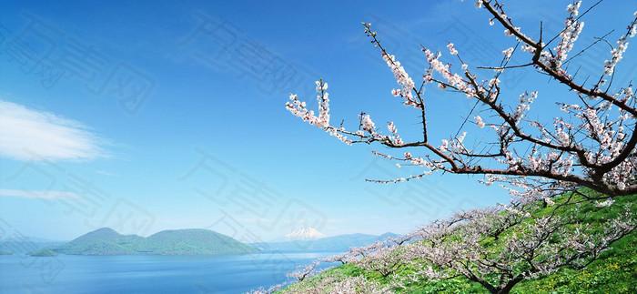蓝色梅花冬季唯美浪漫背景图