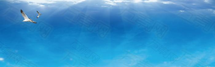 海鸥  蓝色  背景图