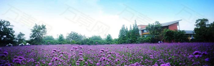 唯美大气紫色花朵海报背景