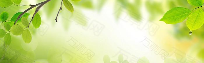简约清爽绿色树叶海报背景