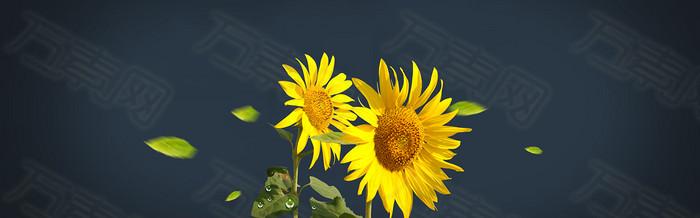 唯美向日葵背景