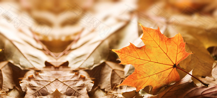 秋天在地上的落叶特写海报背景