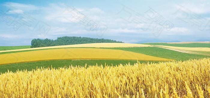 清新麦田背景