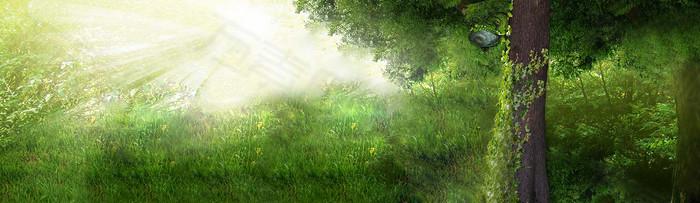 绿树草地背景图