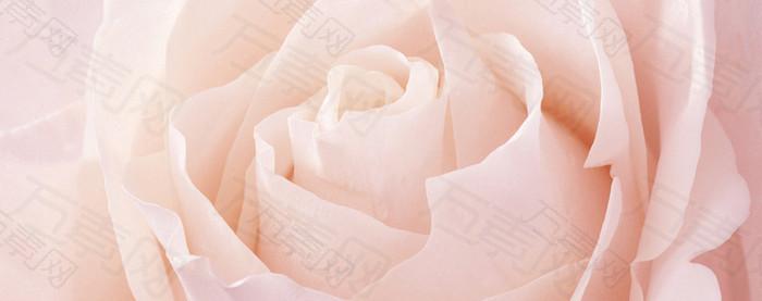 大气粉色玫瑰花海报背景
