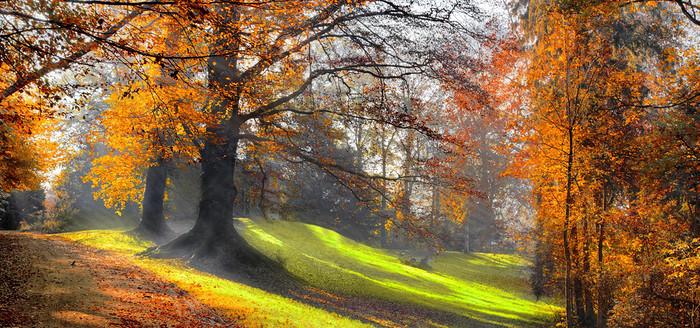 山坡树林背景