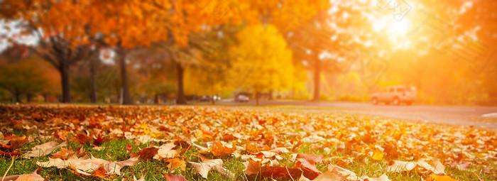 秋季风景背景