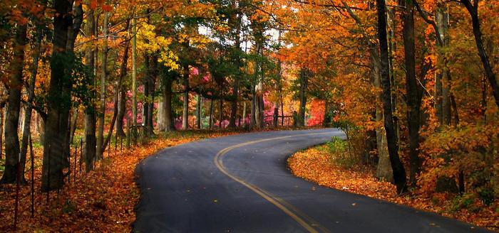 林间公路背景