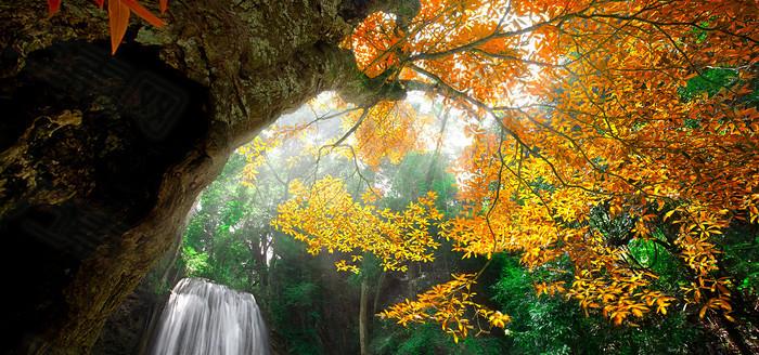 秋季树林瀑布背景