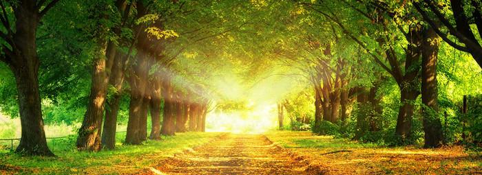 唯美树林背景