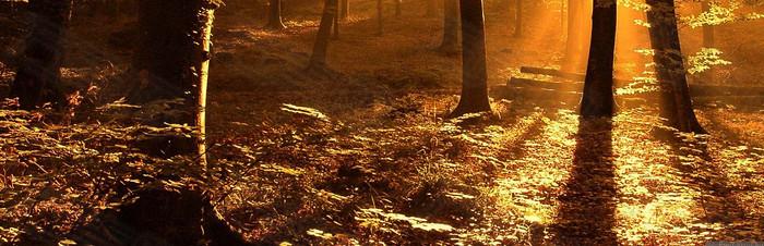 森林日落高清
