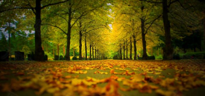 公园道路树林背景