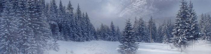 傍晚冬季森林背景