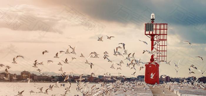 鸽子海港背景