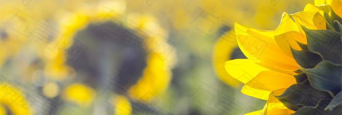 高清炫彩花卉banner背景