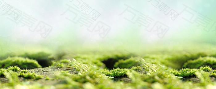 绿色清新背景图