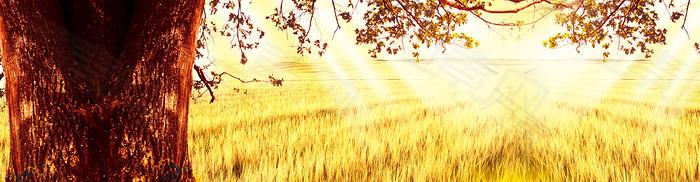 金黄麦田背景图