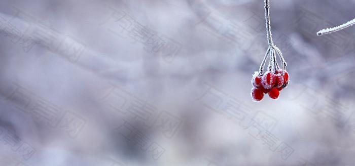 红色果实紫色梦幻雪景背景banner