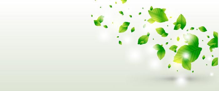 飘散绿叶背景