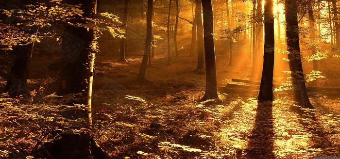 金色森林背景